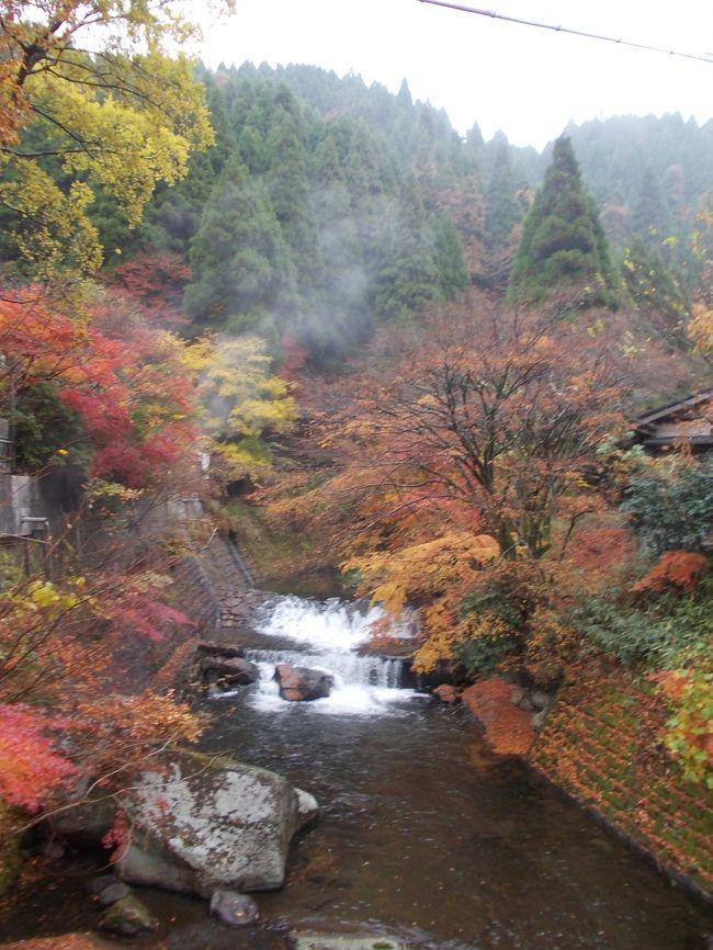 秋の大分熊本湯巡り旅の三日目です。<br />この日は朝からあいにくの天気。朝から移動して一気に熊本県の黒川温泉へ。<br />この辺りは紅葉が非常にきれいに色づき、紅葉と湯けむりの素晴らしい風景を見ることができました。<br />
