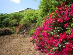 ハワイ TheBus1-DAY PASSで植物園巡りinオアフ島3日目 ココクレーターボタニカルガーデン・マウイブリューイングカンパニー