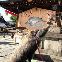 2018年11月 京都御苑中心に紅葉散策 今回もいろいろありました。夜は貴船へ 中編