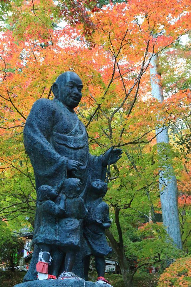 今週は京都へ紅葉狩り。<br /><br />色付きは少し足踏み。<br />木によって青葉から真っ赤で散り盛んの物までまちまち。<br /><br /><br />東福寺(とうふくじ)/通天橋(つうてんきょう)<br />今熊野観音寺(いまくまのかんのんじ)<br />泉涌寺 来迎院(らいごういん)<br />泉涌寺(せんにゅうじ)/御座所(ござしょ)庭園<br /><br />