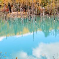 フォトジェニック美瑛☆丘を彩る秋の花♪神秘の輝き青い池♪札幌の夜はすすきのでジンギスカン「ひげのうし」