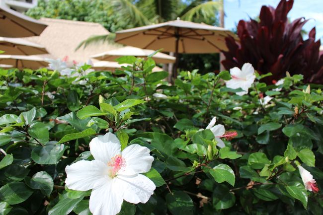 初めてハワイを訪れたのは、学生時代 卒業旅行でして・・<br />その時はオアフ島のみ満喫したのですが、いつかマウイのノスタルジックな風景も眺めたいなぁーと思いました。<br />そして約20年ほど前のツアー「ハワイ3島巡り」に参加することで、念願が叶うと期待するも・・・<br />当時2歳だった娘が1島目のハワイ島で体調を崩し、お目当てのマウイ島には行けなかったのです。<br />その時は団体行動から離れ~オアフ島ワイキキ周辺で水入らずで楽しめたので振り返ってもイイ思い出になりましたが、今回リベンジも兼ねて出かけました♪<br />全体日程は 11月15日 22:25 関西空港 - 10:55 ホノルル<br />                   (アンバサダーホテル3泊)            <br />          11月16日         マウイ島 日帰り<br />      11月17日        オアフ島 周遊<br />      11月18日 13:45 ホノルル - 19日 18:25 関空<br />                            です。<br />限られた日数で効率よく廻る事が出来るよう、レンタカーを手配しました。<br />レンタカーについてQ&Aで質問した際、ご親切に教えて下さった4トラベラーの皆様に とても感謝しております。<br />      <br />