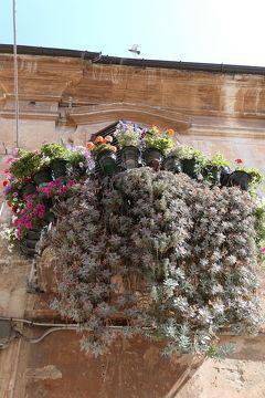 美しき南イタリア旅行♪ Vol.549(第19日)☆イタリア美しき村チッタ・サンタンジェロ 花がいっぱい♪