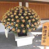 湯島天満宮 菊まつりに行ってきました
