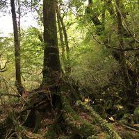 南九州の世界文化遺産・天草と自然遺産・屋久島を巡る=2018年10月�(もののけ姫の森? 白谷雲水峡)