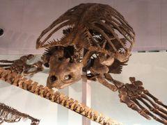 湖東・勝山・関・岐阜周遊/Day2 恐竜博物館や白山平泉寺や