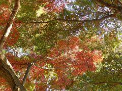 秋が深まった西鶴ケ岡公園‥その②もみじの紅葉が進んだ