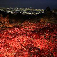 ケーブルカー始発からライトアップまで紅葉の大山寺、阿夫利神社下社と大山登山