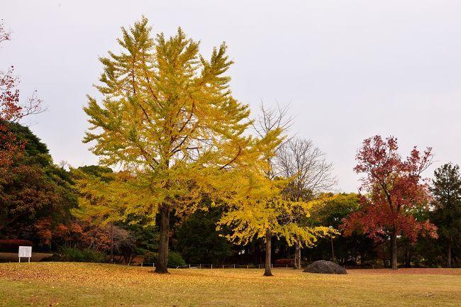 別府市民の憩いの場、南立石公園の紅葉です。
