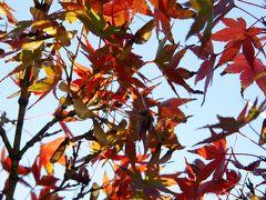 20181123-2 浜離宮庭園 紅葉の季節…の始まりってとこでしょか?