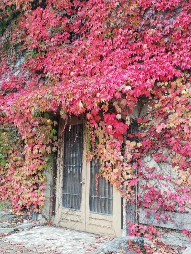 観光地メインの運河から<br />南小樽まで行って観光通りへ。<br />途中道間違えて海まで行くと<br />思いがけないものも。<br />紅葉が綺麗でした。
