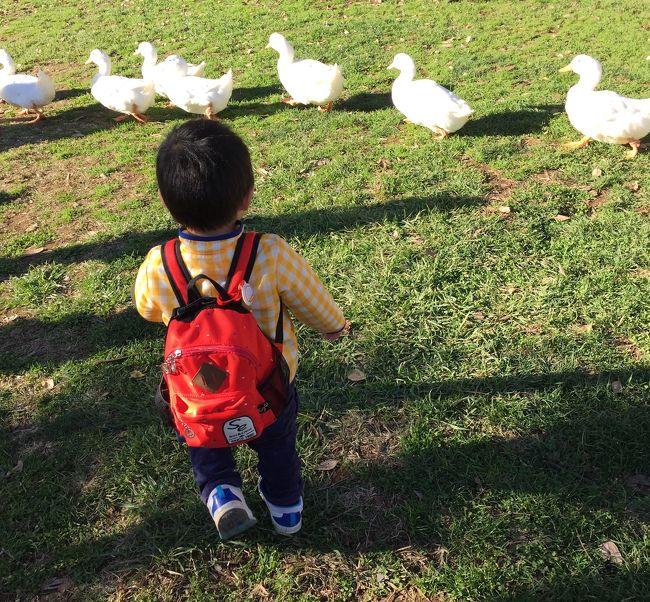 動物好きの息子くんの為に、成田ゆめ牧場へ行ってきました。<br /><br />餌やり、BBQ 、夜のトロッコ列車といろいろ楽しめたけれど、一番夢中になっていたのはソリ遊び!<br />暗くなってからもひたすら滑りまくっていました。<br /><br />都内自宅から片道2時間電車の旅~。<br />JR成田線は1時間に一本なので、時間を調べて行かないと危険です。<br /><br />滑河駅には、無料送迎バスが電車到着時間に合わせて待機していてくれました。<br />15分くらいで成田ゆめ牧場に到着。<br /><br />出かける前に、EPARK でチケットを購入しておいたので、入場料1,400円で600円までのアクティビティチケットが1枚づつもらえました。<br />インフォメーションセンターで、持ってきたベビーカーを400円で預けることができました。