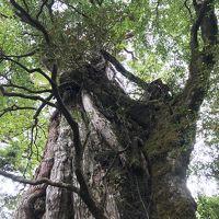 南九州の世界文化遺産・天草と自然遺産・屋久島を巡る=2018年10月�(ヤクスギランドを歩いて海を見ながら露天風呂)