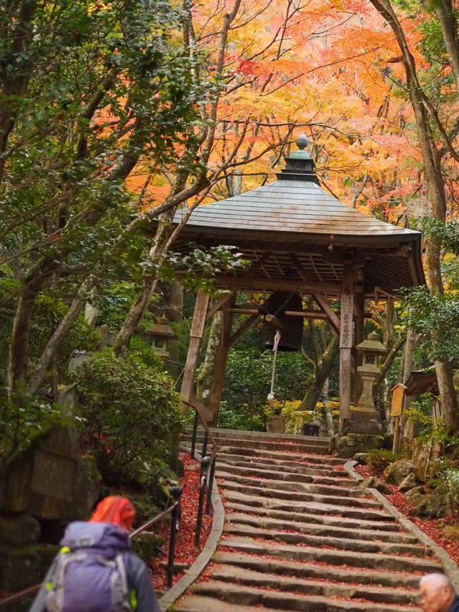 カメラを携えて、広島市内の隠れ家的紅葉の名所、三滝寺へ。<br /><br />一番気に入っていた写真を誤って削除してしまい、残念。<br />