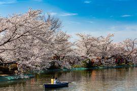 長野/篠ノ井ぐるり旅【4】~竜ヶ池の水面に映る桜~ 日本さくら名所100選【2】臥竜公園【前編】