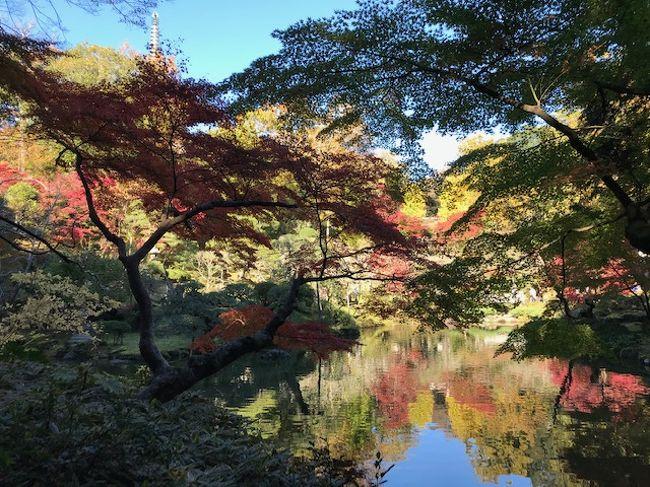 もみじ祭りが行われている成田山に行ってきました。まず参道でウナギをいただいてから、本堂の裏手に広がる成田山公園へ。成田山公園の中は散策路になっていて、公園の奥にある池の周囲で、色鮮やかな紅葉を楽しむことができました。