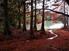 2017年11月 九州紅葉の旅 その1 福岡 篠栗九大の森の紅葉と福岡市内でランチ
