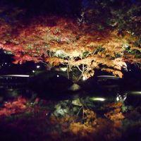 2018年 初冬・・・・・①大田黒公園紅葉ライトアップ