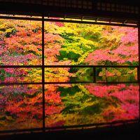 紅葉の瑠璃光院