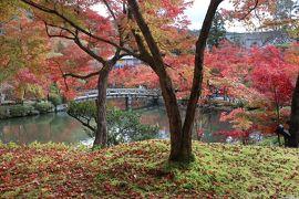 京都・さんぽ地図の旅 紅葉の永観堂~野村碧雲荘前