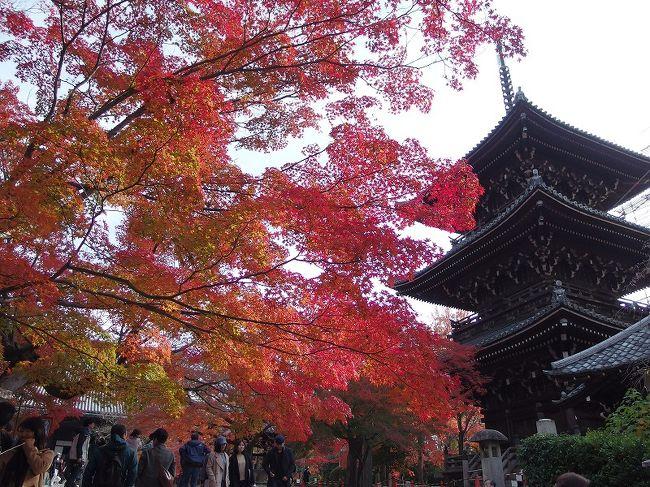 久々に京都来訪。紅葉ピークのこの時期、できるだけ人ごみから離れてゆっくりするぜ!と考え、メジャーな所はできれば避けるか、時間をずらして楽しみました。食と文化、、やはり京都は違う!ことを再認識しました。