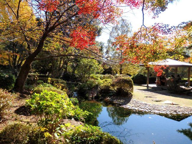 まだ紅葉には早いかも…とは思ったのですが、紅葉を探しながら、両親と少しだけ大宮散策をしてきました。<br />まずは、大宮から東武線で1駅・北大宮駅からスタート!駅から徒歩10分弱の場所にある大宮公園へ向かいました。色付いている木を探しつつ、小動物園で可愛い動物達を見て、日本庭園へ。日本庭園は緑葉の方が多かったものの、色づいている所もあり、綺麗なグラデーションを楽しめました。その後は、氷川神社を通って、歩いて大宮駅へ。駅ビルでランチして、お土産を購入。約2時間ほどのお散歩の記録です。<br />備忘録のような旅行記ですが、、よろしければご覧ください~。<br /><br />