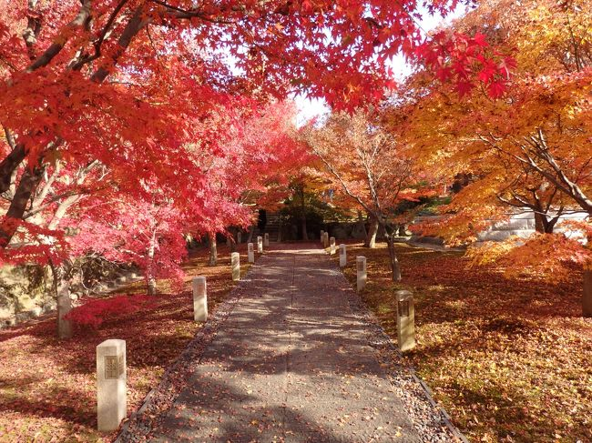 出張の空き時間に、智積院へお詣りしてきました!<br /><br />智積院(ちしゃくいん)は、真言宗智山派(ちさんは)の総本山です。<br />七条通を京都駅の方から東へまっすぐ行った突き当り。<br />東大路通と交わるあたりにあります。<br />京都駅近くなのに、とても静かでのんびりできる、私のお気に入りの寺院です。<br /><br />秋晴れの空ともみじと鳥の声。<br />ゆったりと独り占め。