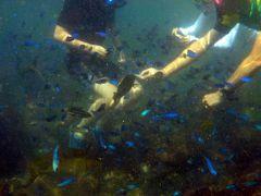 お盆休みのエクシブ初島3連泊 初島第2漁港 フィッシャリーナのスキンダイビングその2
