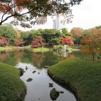 東京で孫たちの家二カ所に滞在(小石川後楽園の紅葉を楽しむ)