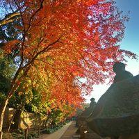 モミジが街へやって来た♪−紅の彩−秋と冬の狭間にて【金鳳山平林寺】