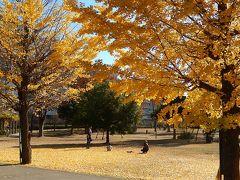 銀杏の黄葉が素晴らしい福岡中央公園を訪問