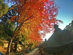 モミジが街へやって来た♪-紅の彩-秋と冬の狭間にて【金鳳山平林寺】