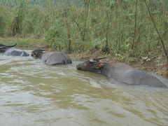 ニンビンの舟遊び。まだ人の少ない、Linh Coc リンコック。水牛さんたちに会えるかも。