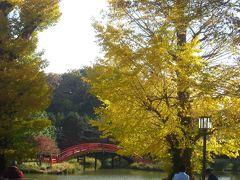 金沢文庫から金沢八景まで歩く 称名寺のいちょうがきれいな黄金色に色づいていました(^▽^)/