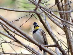 野鳥撮影記録2018年12月 - ①