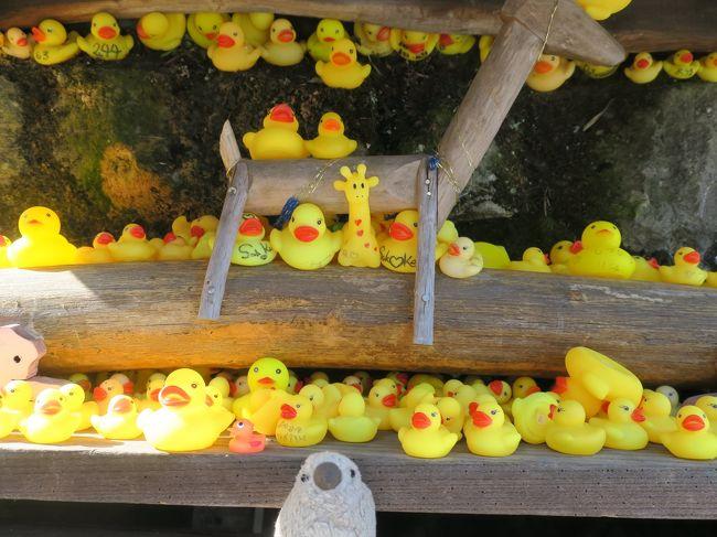 ふるさと納税でもらった渋川市の感謝券を使っていつもよりちょっと贅沢な温泉旅。<br />今年は伊香保温泉に行ってみました。<br />初日は上野村まで足を伸ばし、秩父→ダナン→飛騨に続きまたしても洞窟探検<br />翌日は伊香保の石段街をぶらぶら散策し、榛名湖・榛名神社を訪ねました。<br /><br />今回も我が家のマスコット桜文鳥雛ぬいぐるみゴエモン(+一羽)がお供です。<br /><br />後編は伊香保温泉散策→水沢うどん→榛名湖→榛名神社まで。