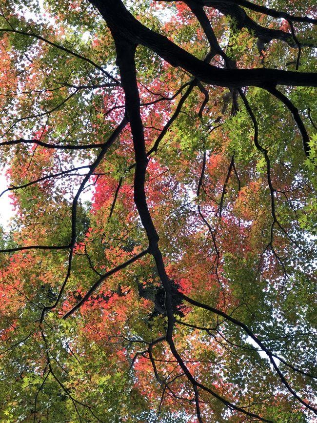徳川美術館のある徳川園<br />紅葉のきれいな季節になりました。
