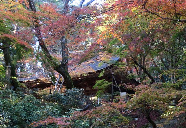 高野山と奈良3社寺の紅葉を見に<5> 幽玄の趣き漂う室生寺