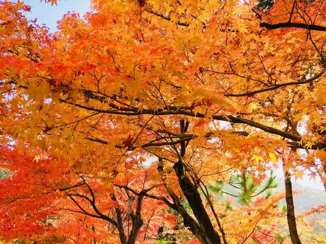 紅葉?真っ盛りのの京都で 誕生日を過ごしたいと思い 平日の奈良 京都を散策。いつもは 休日を利用して行くので混んでいるのだが、平日はほどほどの人混みで 気持ち良くまわれた。<br />1日目  天気がイマイチだったので、奈良に行ってしまおうということになり 奈良線で 東福寺 ~宇治の平等院 ~奈良の興福寺、東大寺、春日大社 奈良公園を1周した。