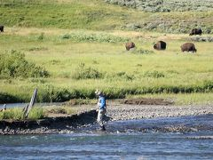 イエローストーン国立公園でフィッシング. ラマー川でバイソンと釣り編 Fishing with Bison in Lamar River, Yellowstone National Park