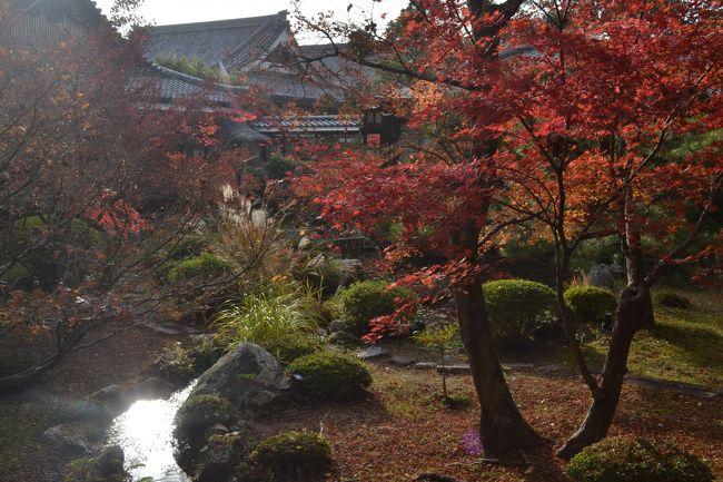 福利厚生で購入した昼食+拝観チケットがあったので、ぶらっと京都へ行って参りました。<br />大覚寺、清凉寺とまわり、嵐山でお食事も楽しみました。