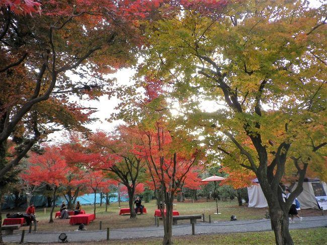 近年の京都市内の紅葉時期は混雑覚悟での外出になります。<br />それでもブラリ~と出かけられる<br />真如堂や京都御苑、植物園へと足を運びますが<br />元離宮の二条城は紅葉のイメージが無く梅や桜の時期に訪ねていますが<br />散歩がてらに行って見ました。<br /><br />※現在、二条城では修理整備が行われている場所があります。<br /><br />