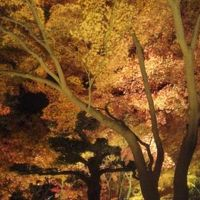 深夜のフェリーで行く香川� 紅葉のライトアップと温泉での修羅場( ̄◇ ̄;)