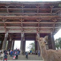 2018年1月1日は鹿に癒されながら奈良で初詣