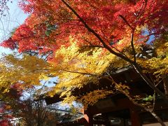 本土寺の紅葉_2018_全体的には進行中ですが、十分に綺麗です(千葉県・松戸市)