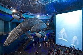 【ロシア】ロシア最大級のプリモルスキー(沿海州)水族館で見た野生のキツネ
