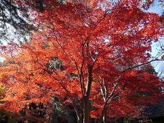 平林寺の紅葉☆辰美庵☆2018/11/30