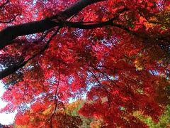 2016年・真っ赤だった昭和記念公園の紅葉