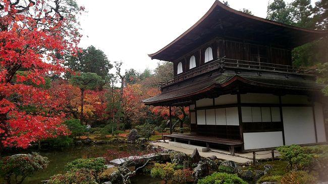 京都に毎年来ています。<br />前回は仕事でしたが、今回はほんまにフリーです!<br />( ̄ー ̄)大阪のまちにいる間は、京都は600円で新快速でこれるので、近くなって便利!<br />(^○^)まあ、お払いしとこう!