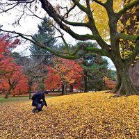京都で紅葉を静かにゆっくり楽しめる場所
